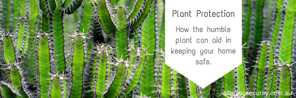 Plant Protection: How the humble plant can aid in keeping your home safe