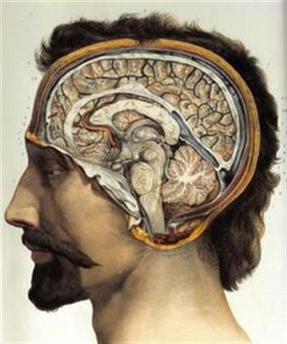 Brain in Depth - Nimes - Nov 2021