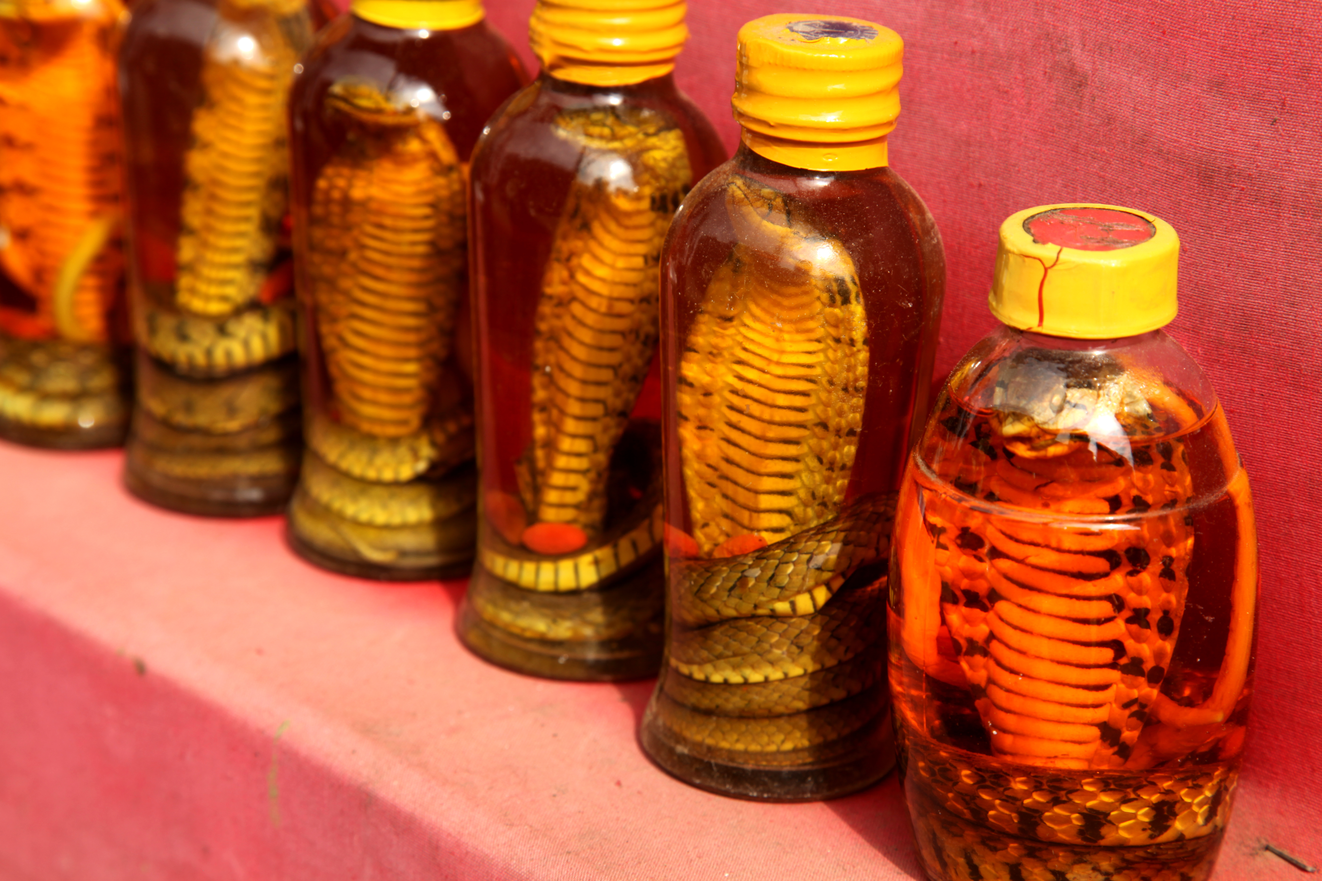 Ancient Chinese Medicine - Curing Cancer