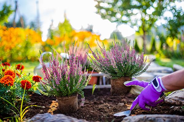 autumn-garden-maintenance