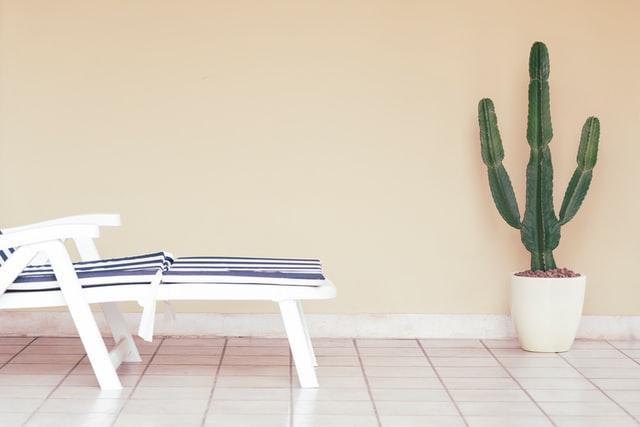 Pot plant cactus and sun lounge