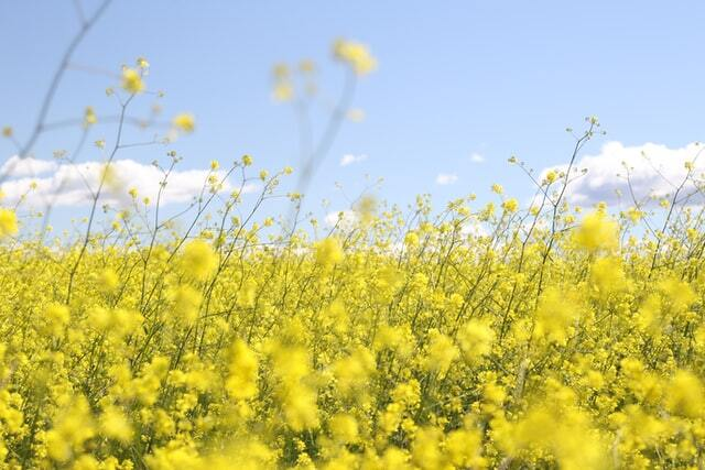 Genius tips to manage spring allergies in your home