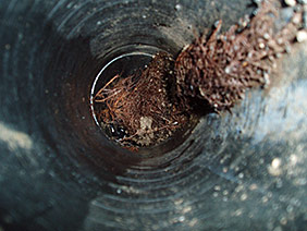 Blocked Drains   Tree Roots Intrusion   Reline Solutions