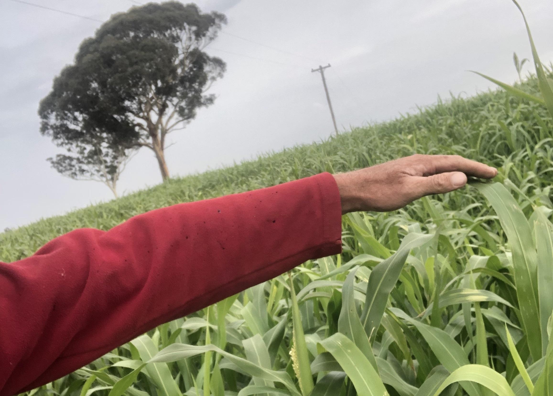Soil Health and Soil Carbon
