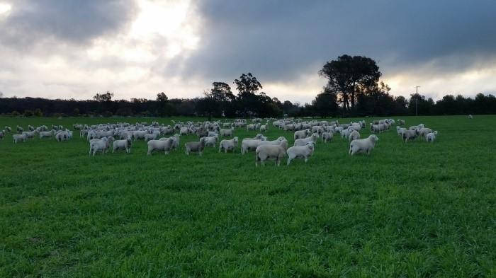 Broadacre Pasture