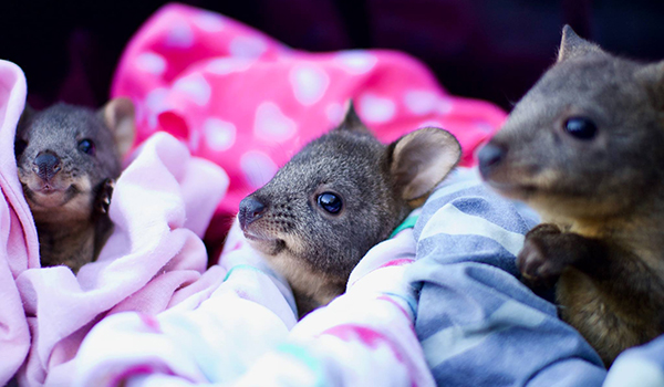 Introduction to Wildlife Rehabilitation Course