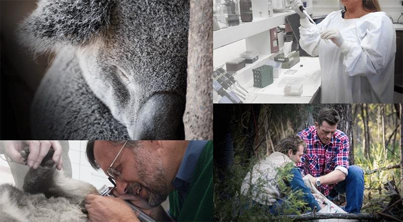 Koala Health Hub   Project Update