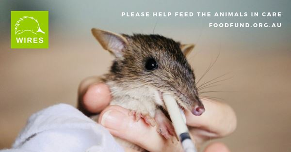 Food Fund for Wildlife in Care