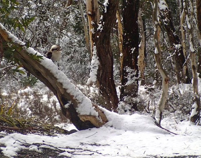 Winter and extreme weather advice to help wildlife