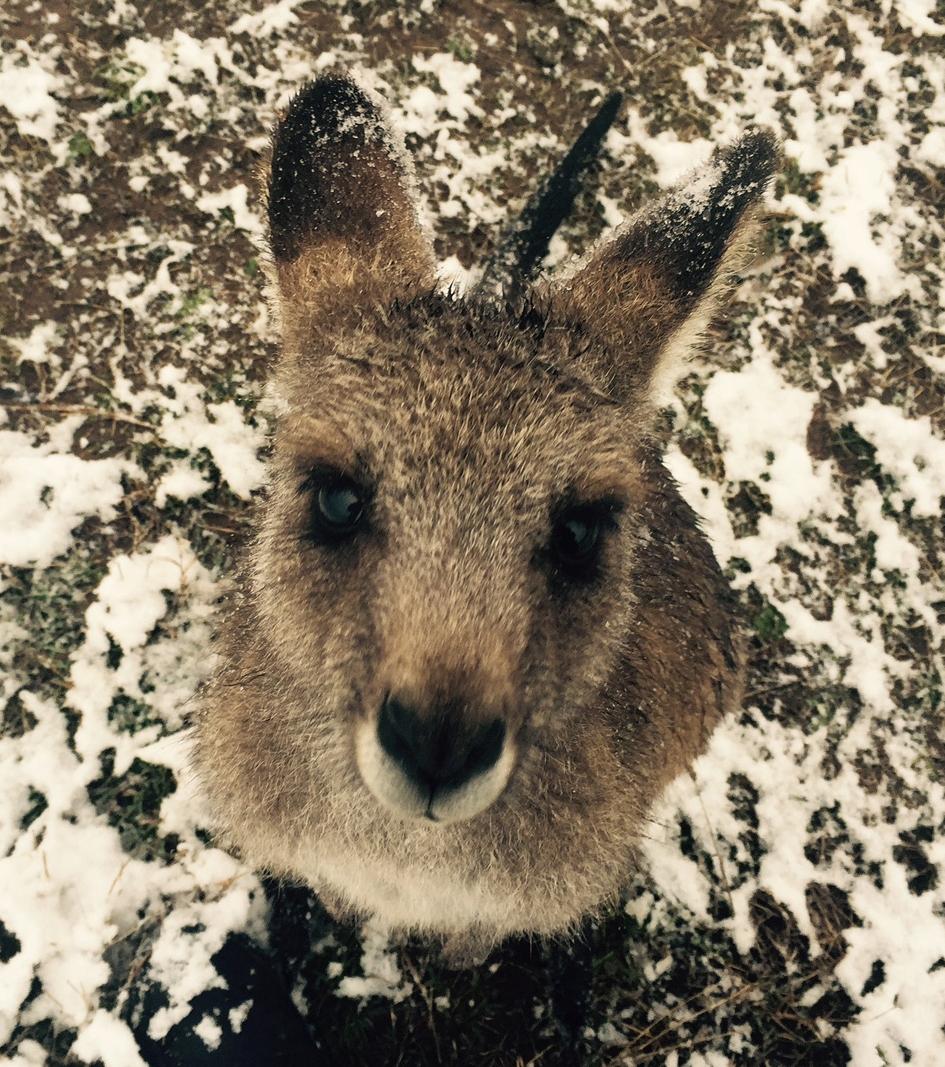 Polar Blast may impact vulnerable animals