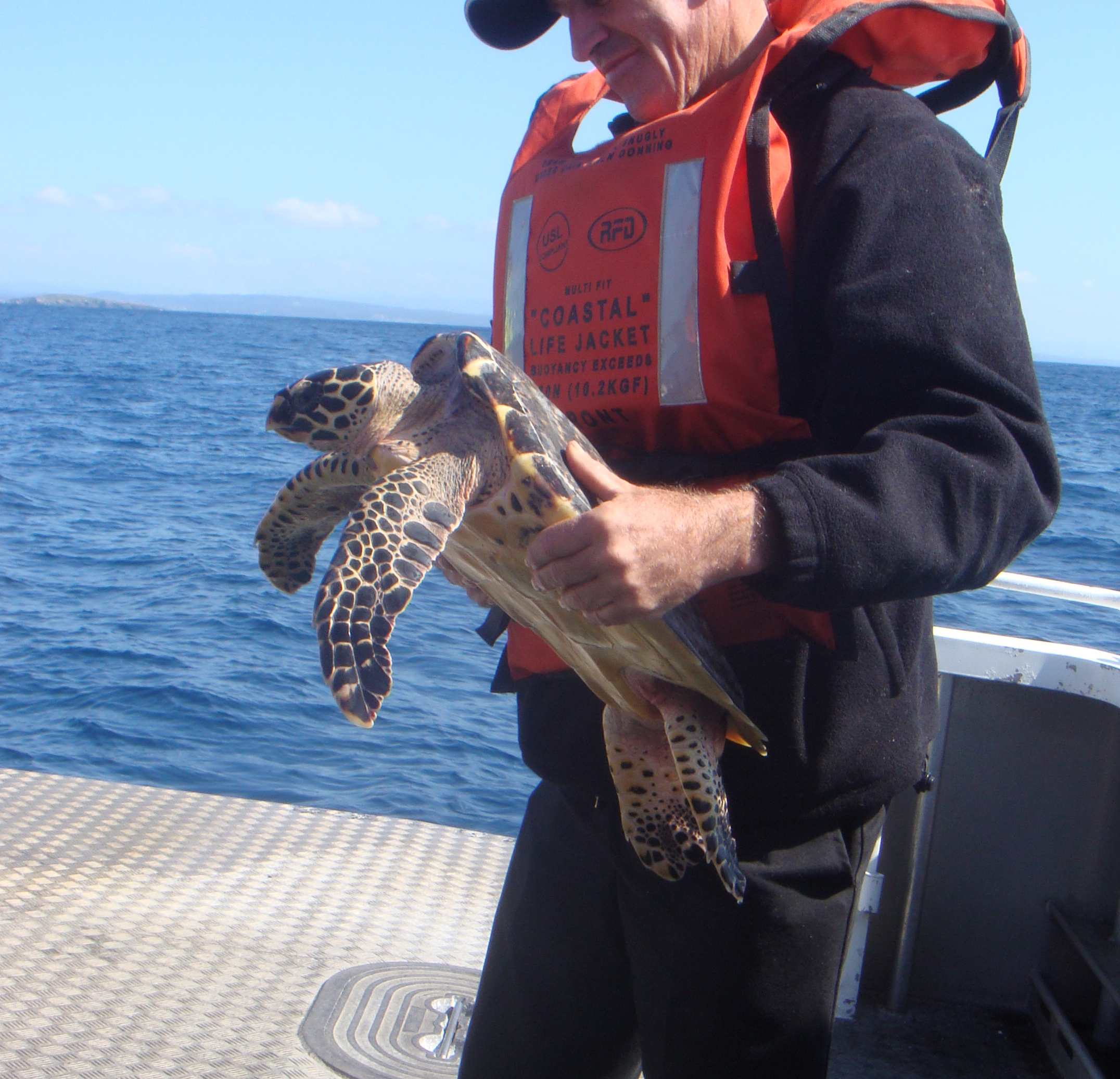 WIRES Introduces National Course for Sea Turtle Rescue