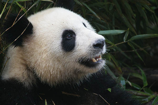 Google Panda is back out of the cage