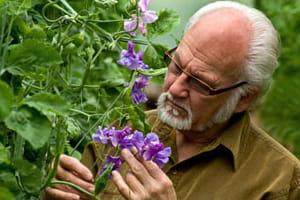 Cultivar breeder Keith Hammett with sweetpea